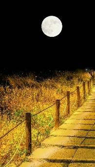 Good-Night-Nature-Video