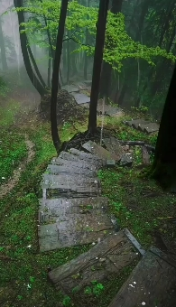 Rain-Monsoon-Jungle-Video